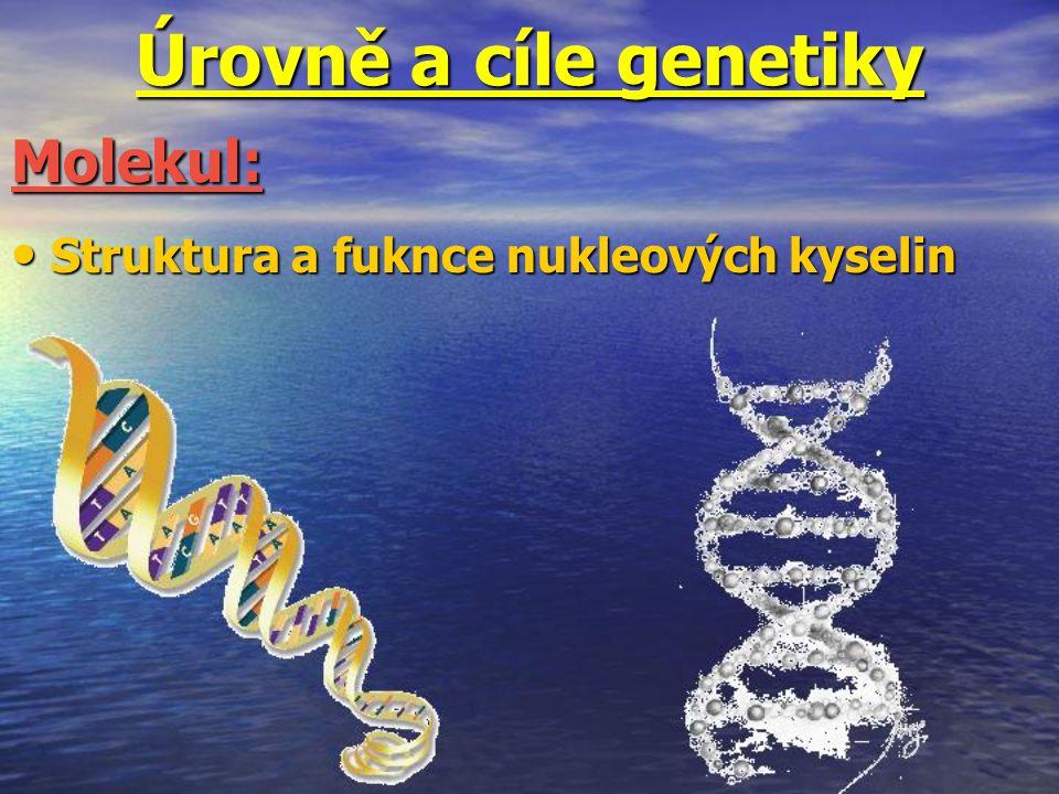 Úrovně a cíle genetiky Molekul: Struktura a fuknce nukleových kyselin