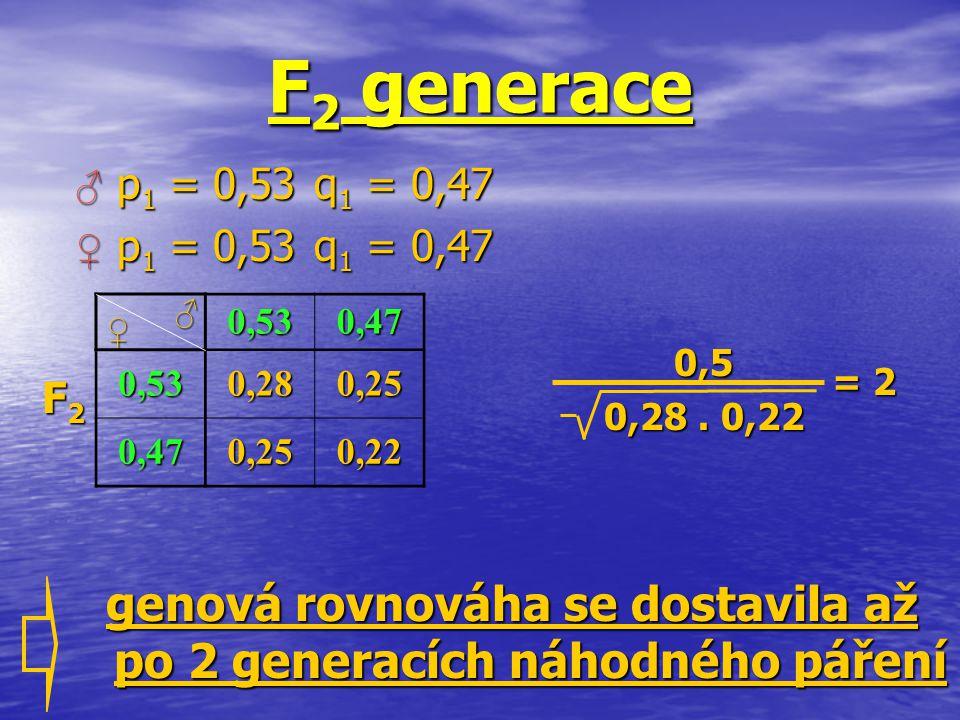 genová rovnováha se dostavila až po 2 generacích náhodného páření