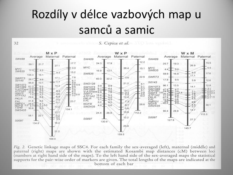 Rozdíly v délce vazbových map u samců a samic