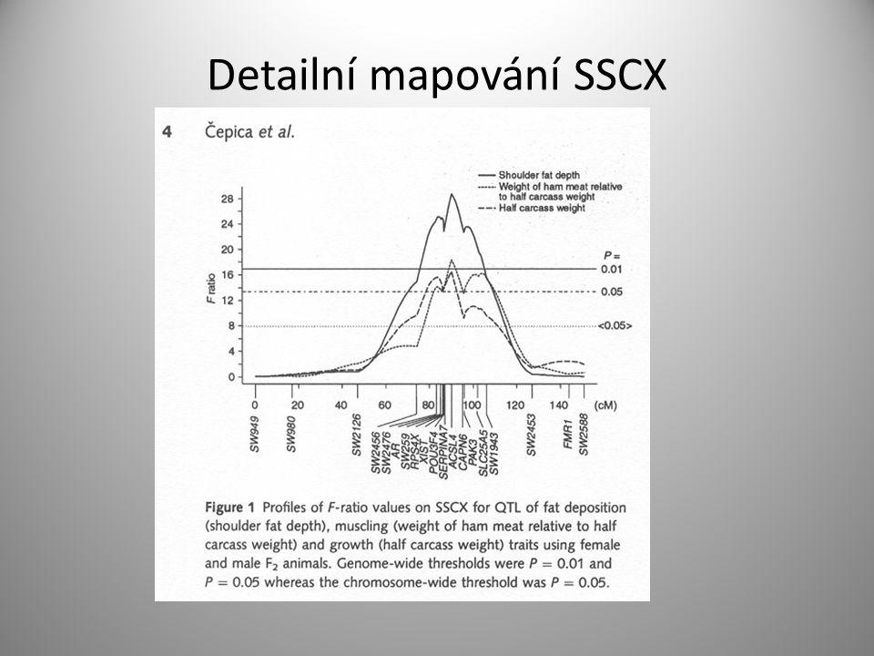 Detailní mapování SSCX