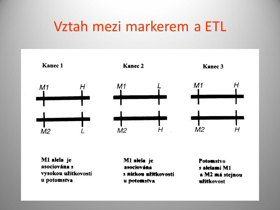 Vztah mezi markerem a ETL