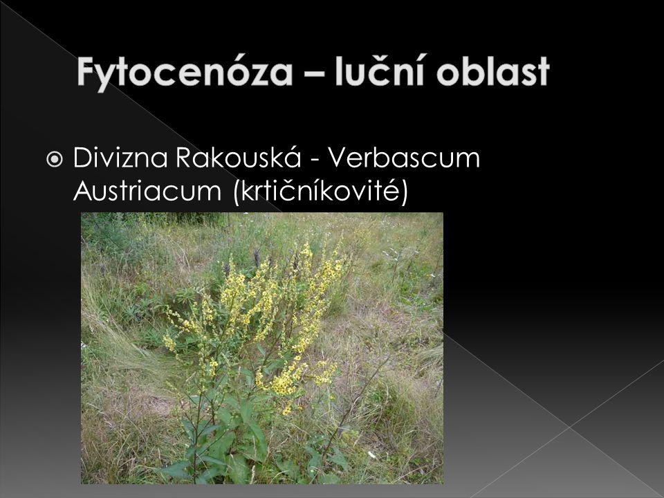 Fytocenóza – luční oblast