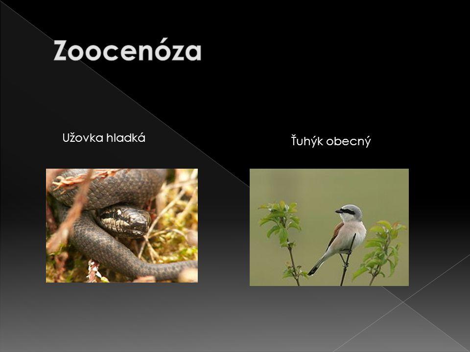 Zoocenóza Užovka hladká Ťuhýk obecný