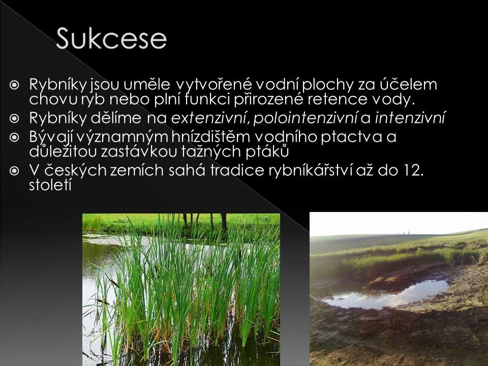 Sukcese Rybníky jsou uměle vytvořené vodní plochy za účelem chovu ryb nebo plní funkci přirozené retence vody.