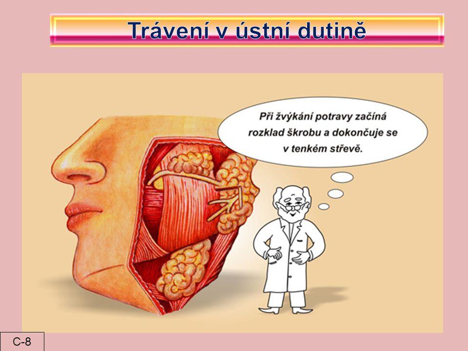Trávení v ústní dutině C-8