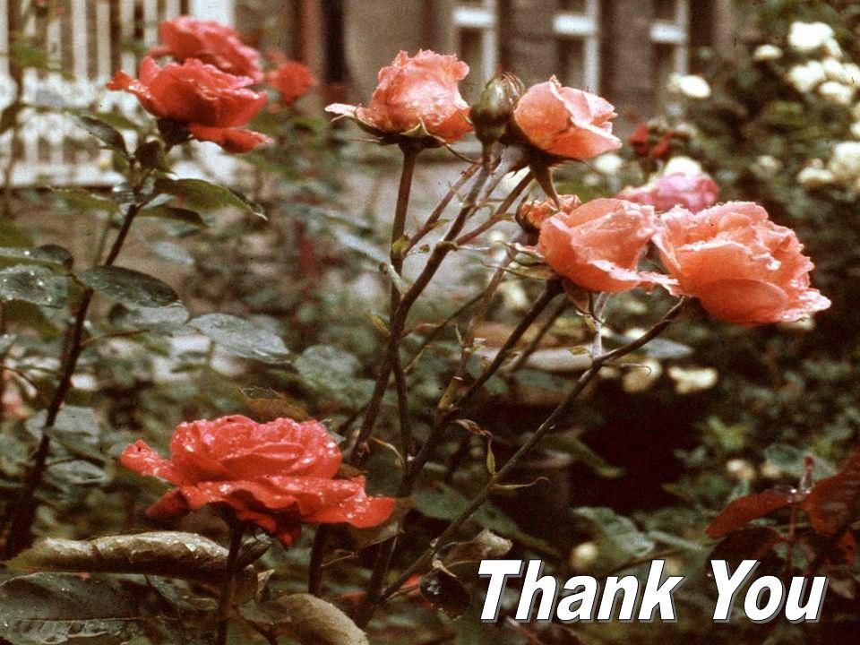 Thank You OnkoUnie 2011