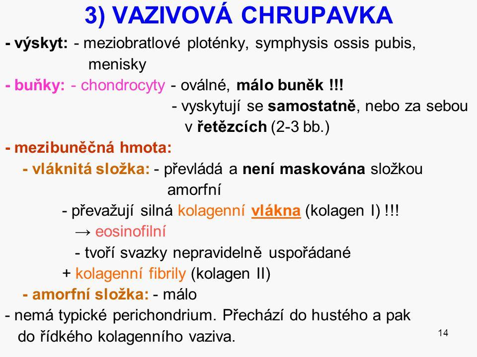 3) VAZIVOVÁ CHRUPAVKA - výskyt: - meziobratlové ploténky, symphysis ossis pubis, menisky. - buňky: - chondrocyty - oválné, málo buněk !!!