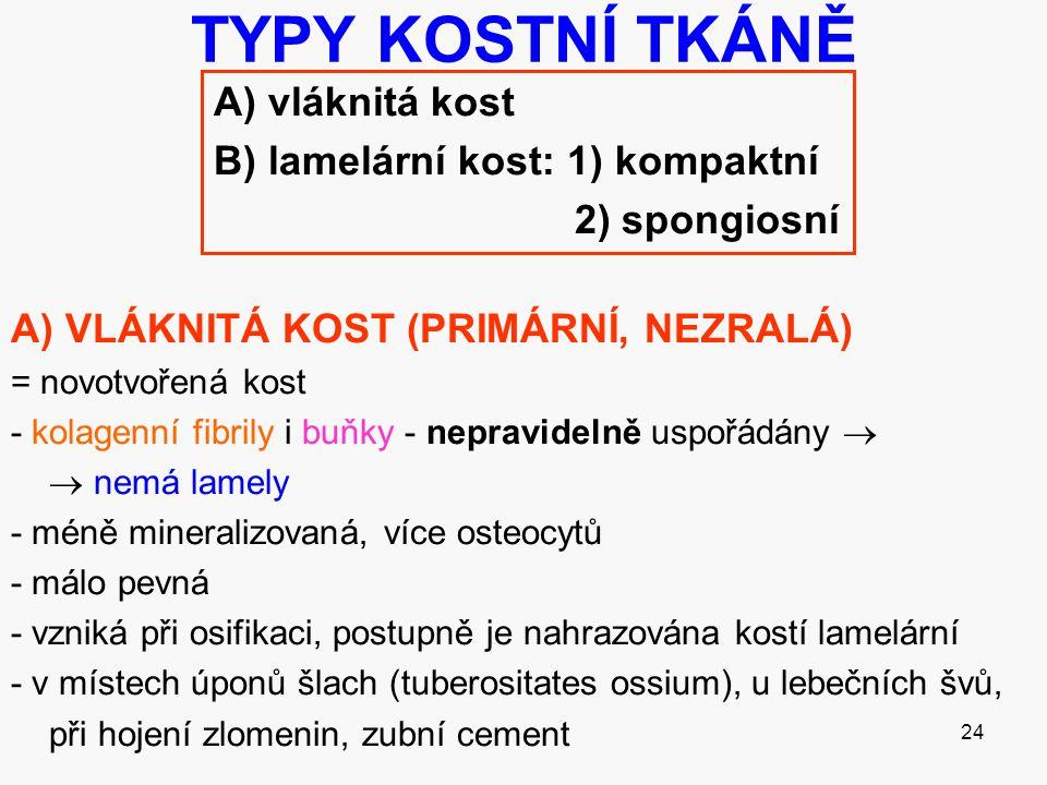 TYPY KOSTNÍ TKÁNĚ A) vláknitá kost B) lamelární kost: 1) kompaktní