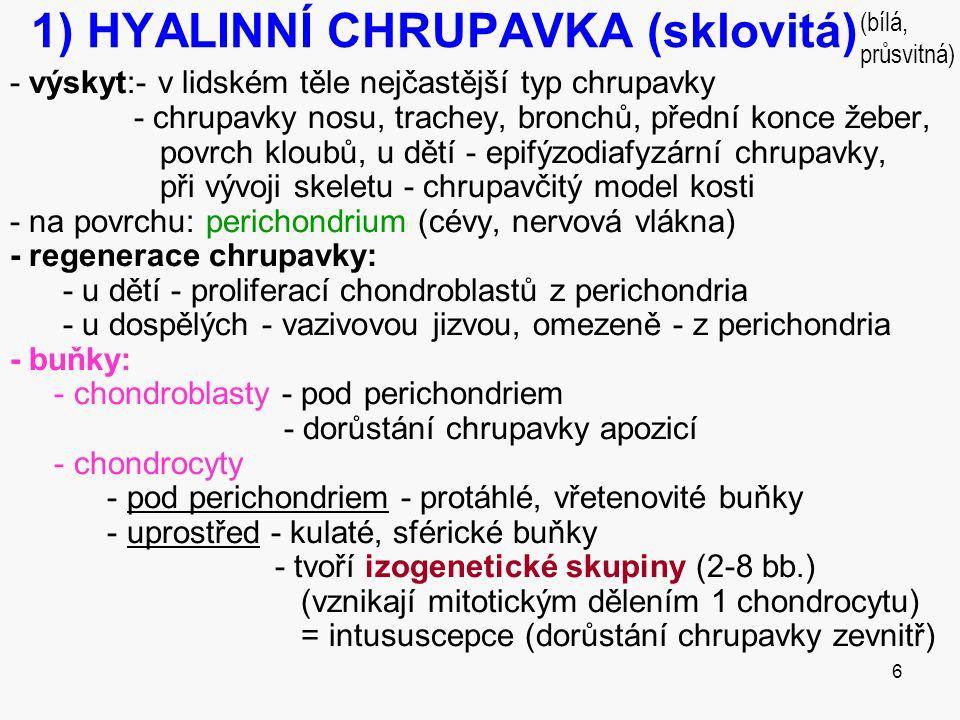 1) HYALINNÍ CHRUPAVKA (sklovitá)