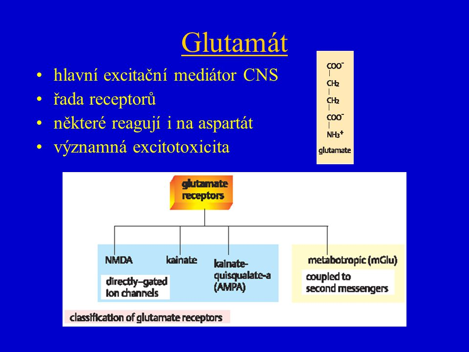 Glutamát hlavní excitační mediátor CNS řada receptorů