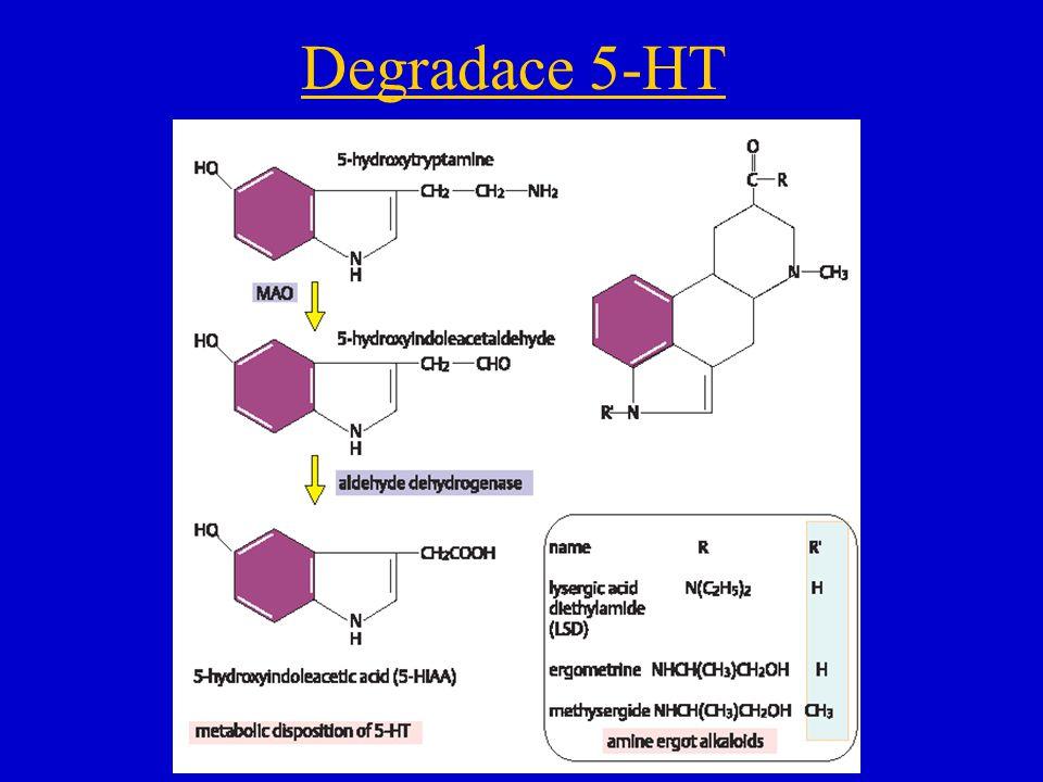 Degradace 5-HT obr receptory