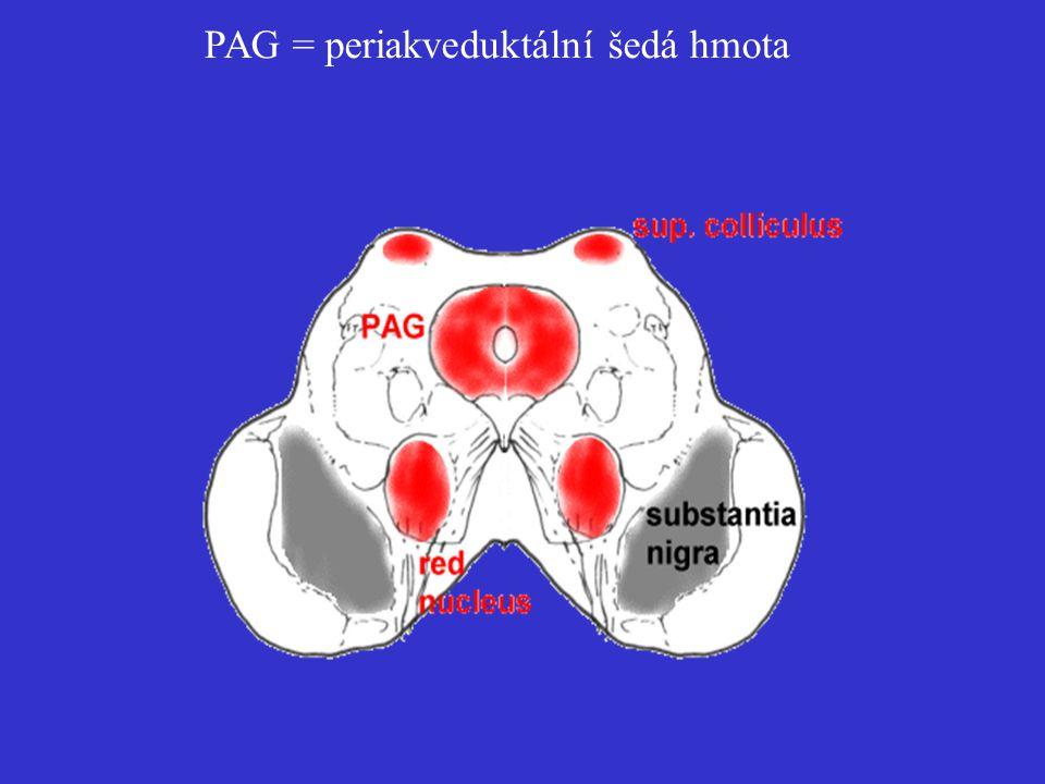 PAG = periakveduktální šedá hmota