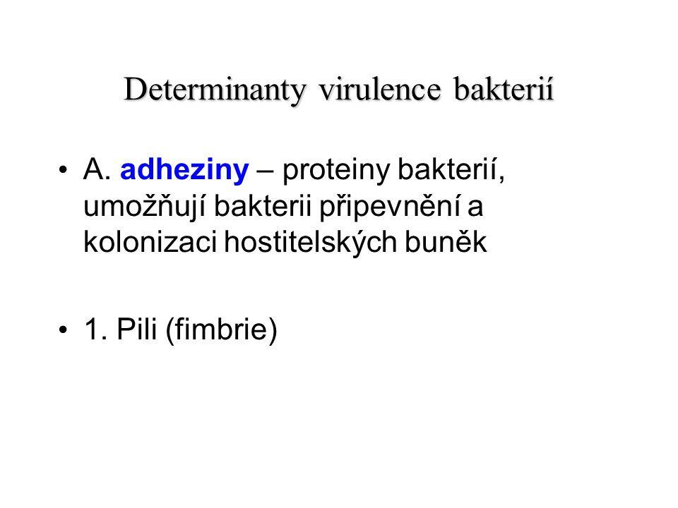 Determinanty virulence bakterií