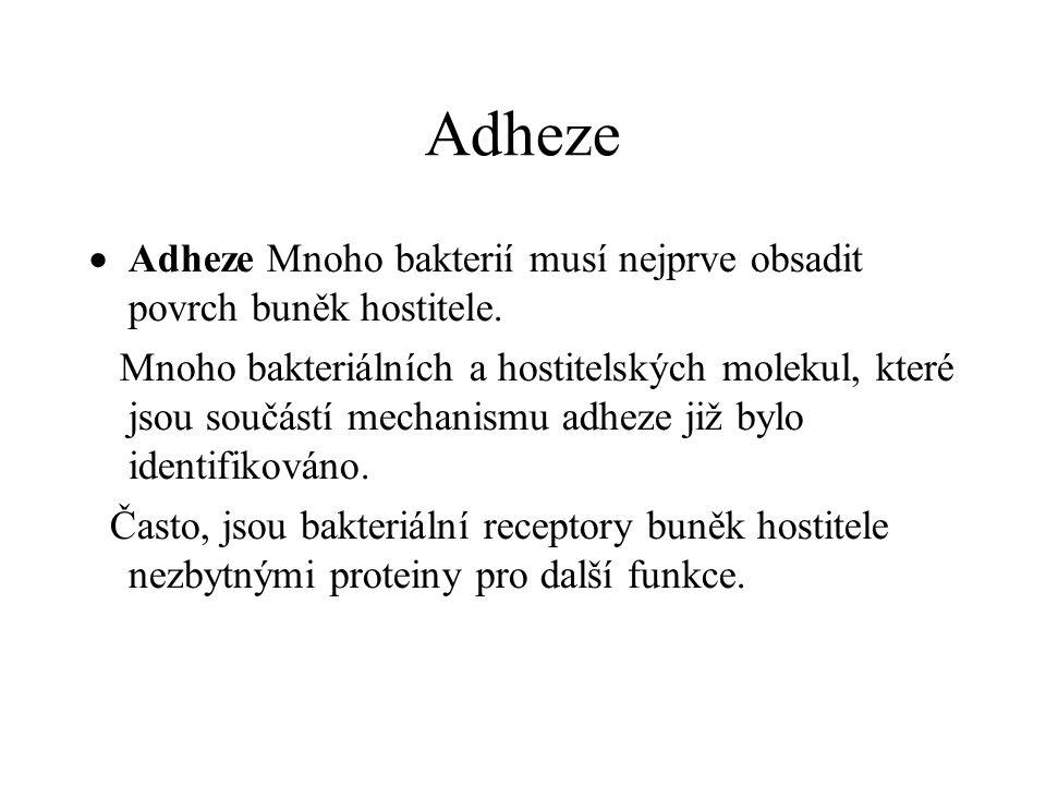 Adheze Adheze Mnoho bakterií musí nejprve obsadit povrch buněk hostitele.