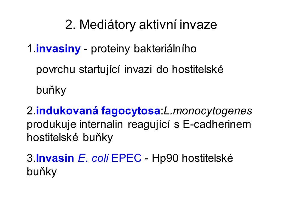 2. Mediátory aktivní invaze