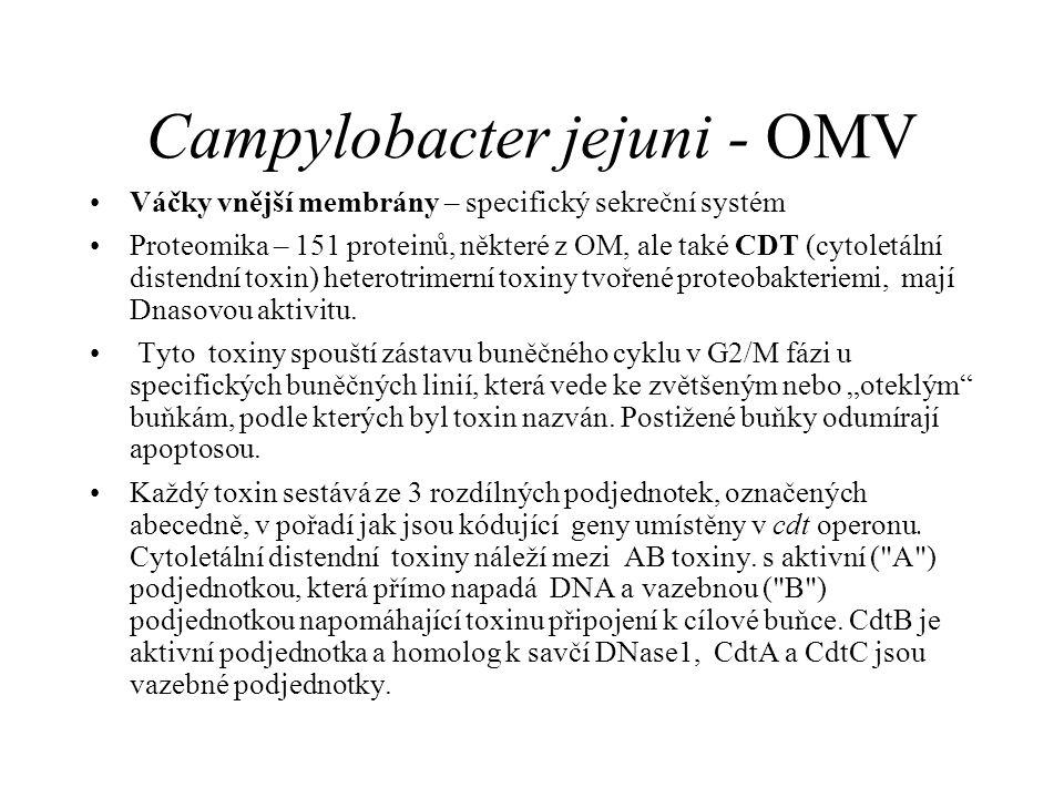 Campylobacter jejuni - OMV