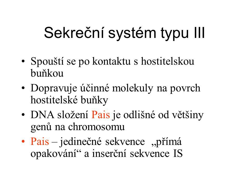 Sekreční systém typu III