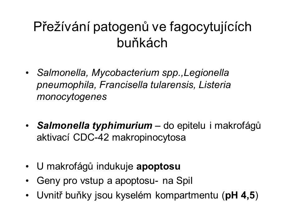 Přežívání patogenů ve fagocytujících buňkách