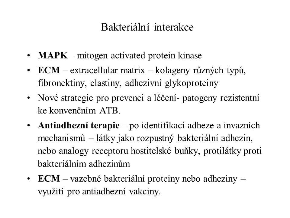 Bakteriální interakce