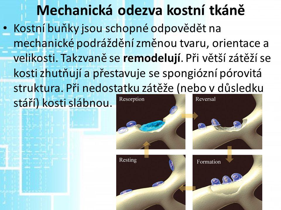 Mechanická odezva kostní tkáně