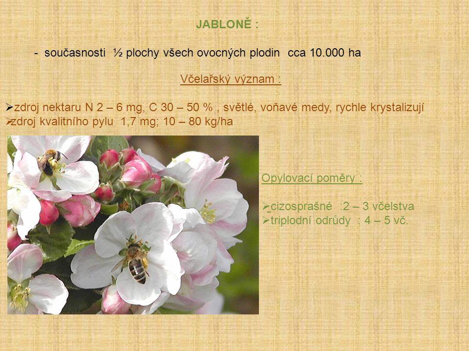 JABLONĚ : - současnosti ½ plochy všech ovocných plodin cca 10.000 ha. Včelařský význam :
