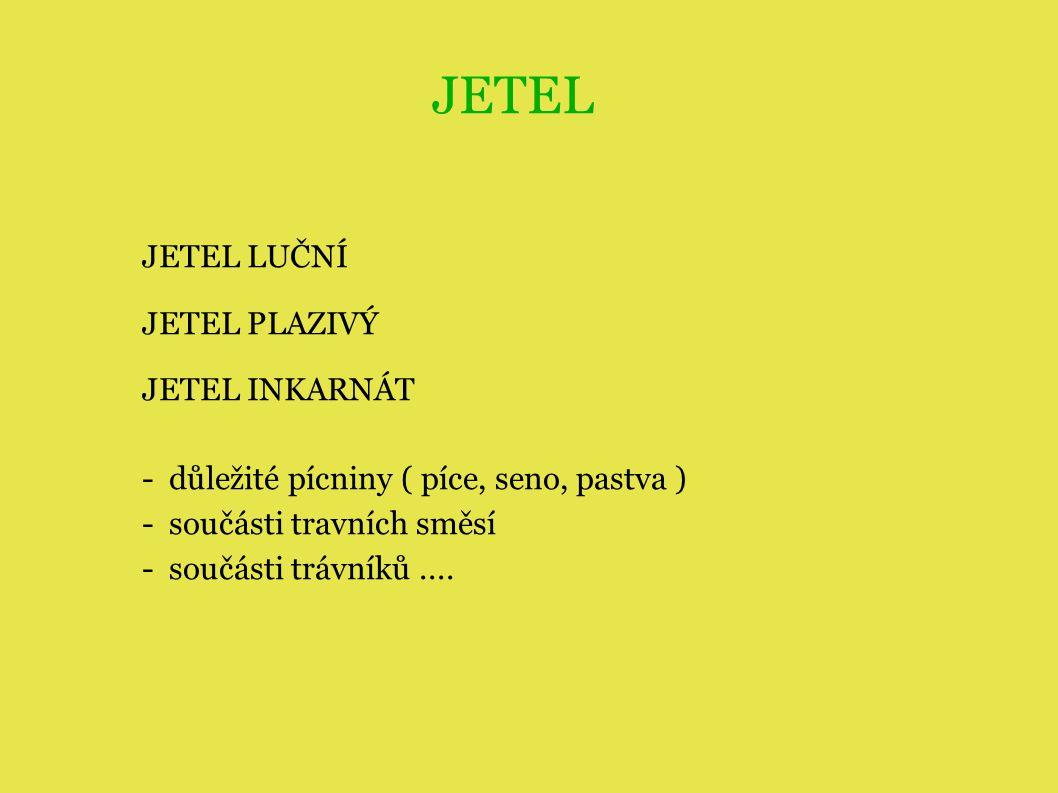 JETEL JETEL LUČNÍ JETEL PLAZIVÝ JETEL INKARNÁT