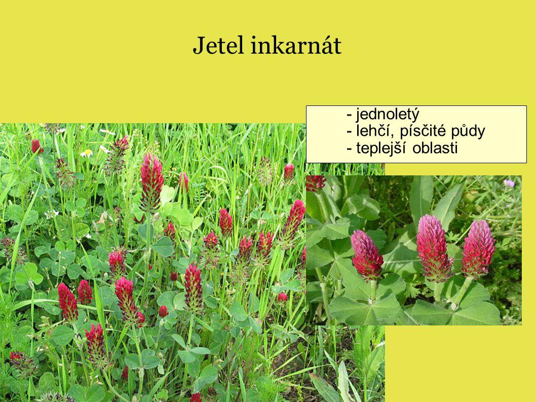 Jetel inkarnát - jednoletý - lehčí, písčité půdy - teplejší oblasti