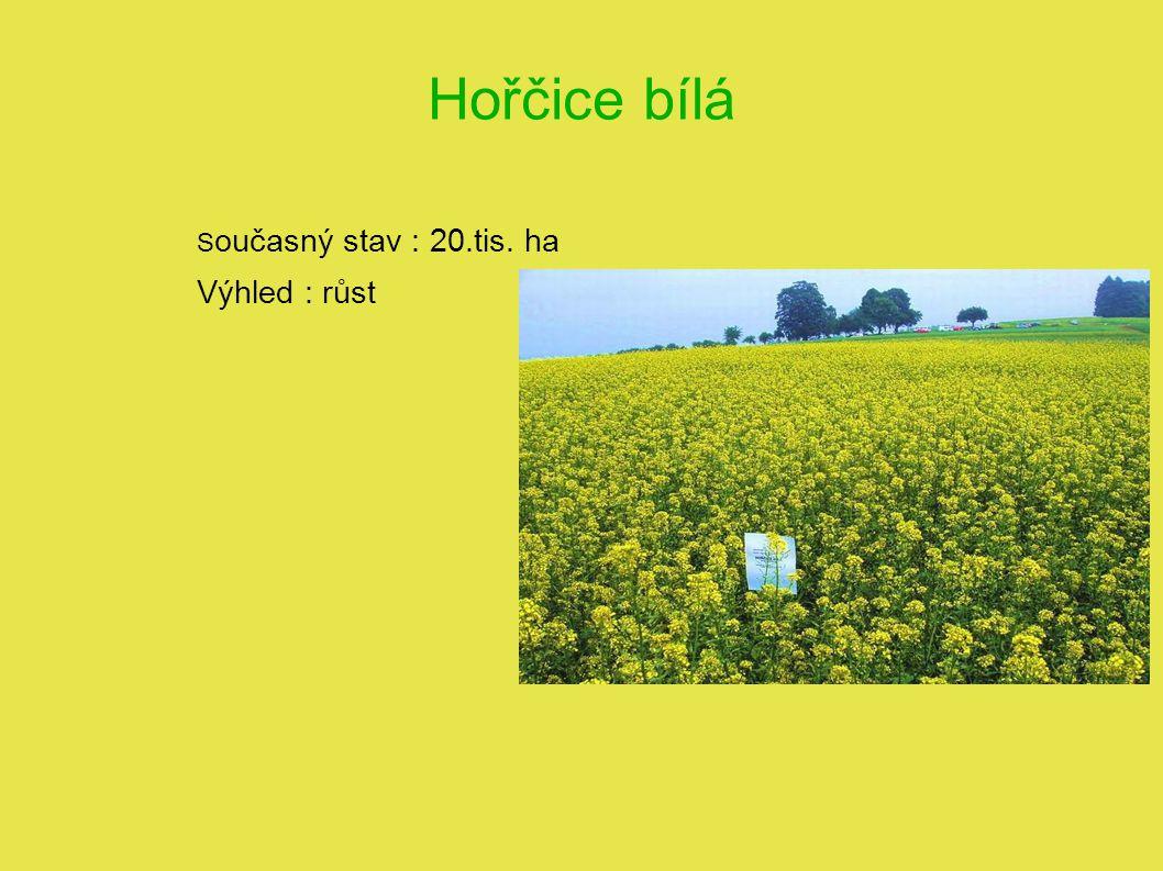 Hořčice bílá Současný stav : 20.tis. ha Výhled : růst