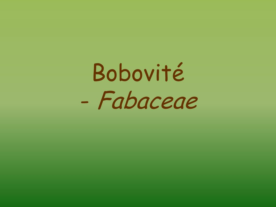Bobovité - Fabaceae