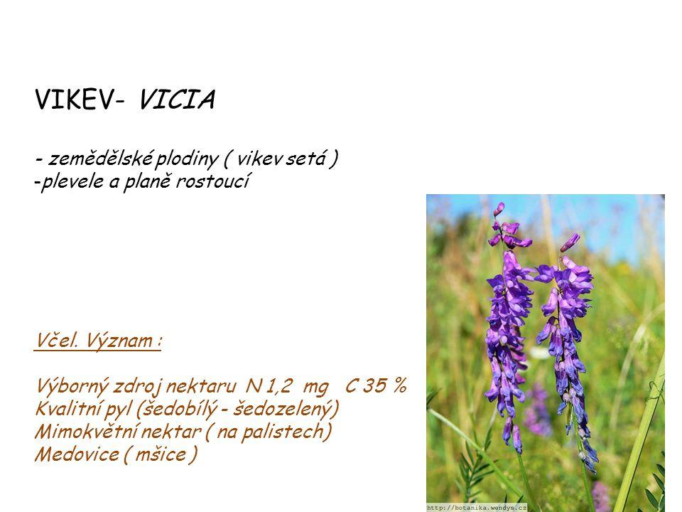 VIKEV- VICIA - zemědělské plodiny ( vikev setá )
