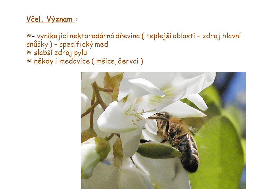 Včel. Význam : - vynikající nektarodárná dřevina ( teplejší oblasti – zdroj hlavní snůšky ) – specifický med.