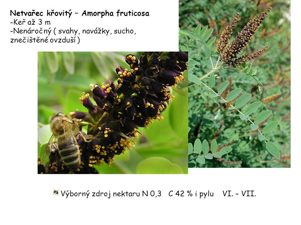 Netvařec křovitý – Amorpha fruticosa