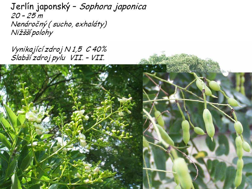 Jerlín japonský – Sophora japonica