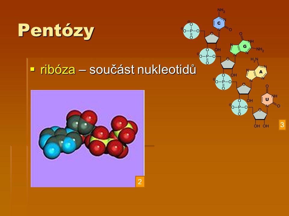Pentózy ribóza – součást nukleotidů 3 2