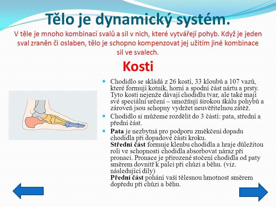 Tělo je dynamický systém