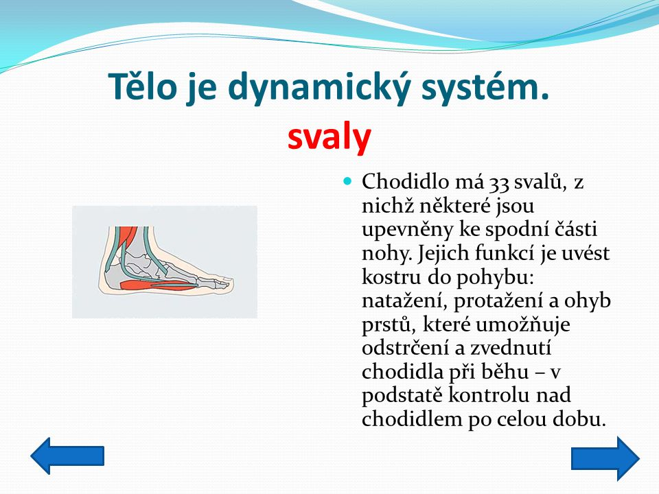 Tělo je dynamický systém. svaly
