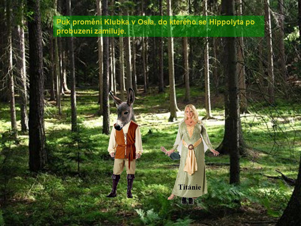 Puk promění Klubka v Osla, do kterého se Hippolyta po probuzení zamiluje.