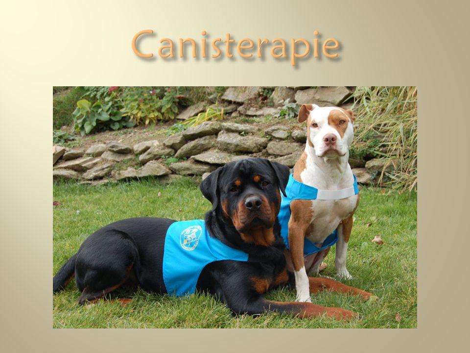 Canisterapie Foto z archivu Jany Králové
