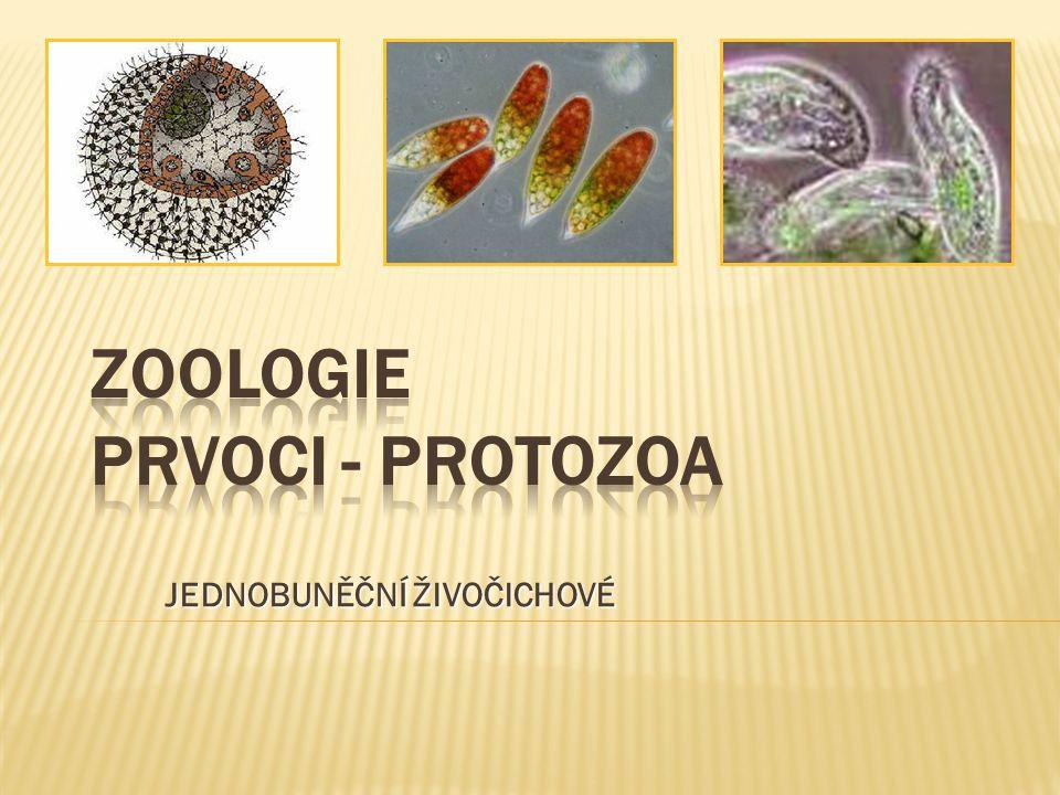 ZOOLOGIE PRVOCI - PROTOZOA