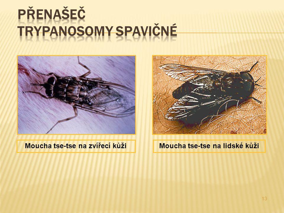Přenašeč trypanosomy spavičné