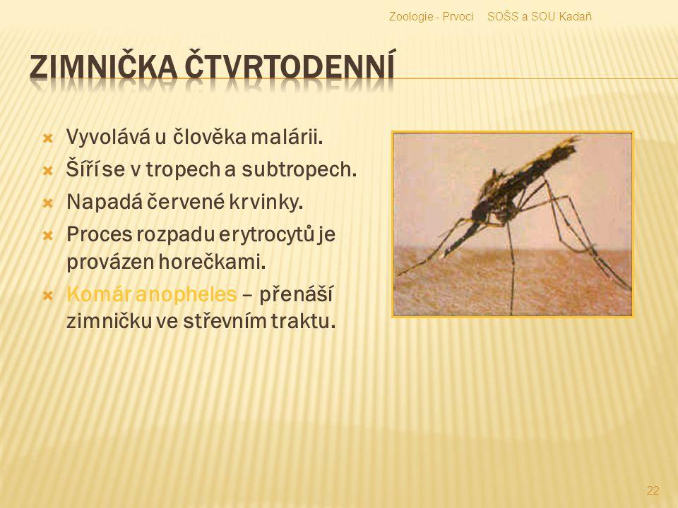 Zimnička čtvrtodenní Vyvolává u člověka malárii.