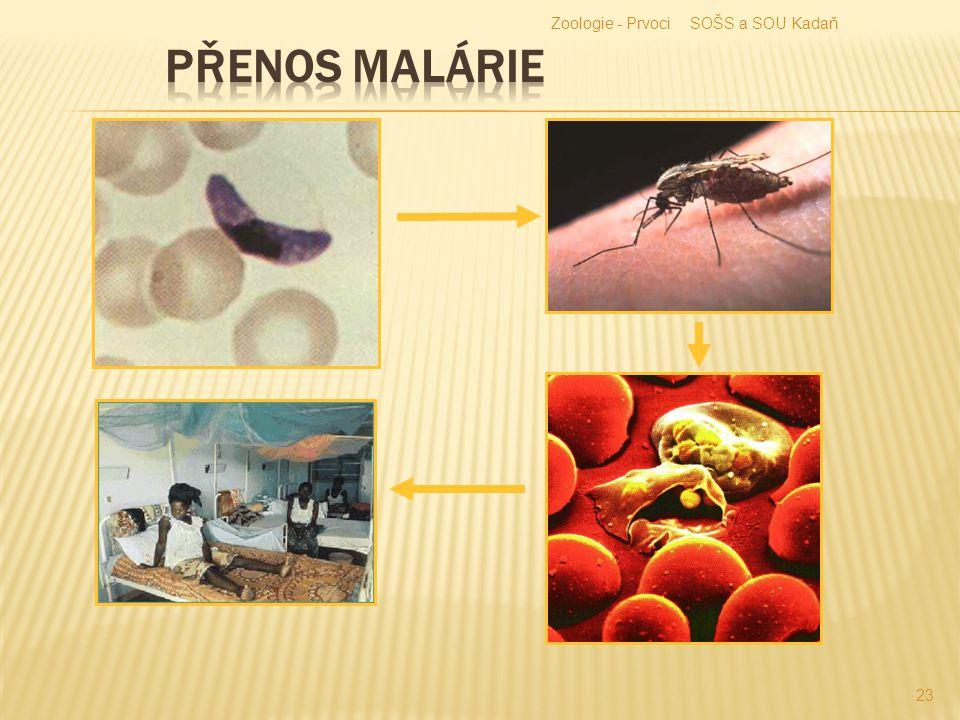 Zoologie - Prvoci SOŠS a SOU Kadaň Přenos malárie