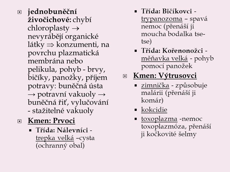 jednobuněční živočichové: chybí chloroplasty  nevyrábějí organické látky  konzumenti, na povrchu plazmatická membrána nebo pelikula, pohyb - brvy, bičíky, panožky, příjem potravy: buněčná ústa → potravní vakuoly → buněčná řiť, vylučování - stažitelné vakuoly