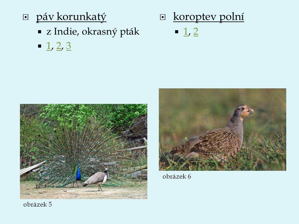 páv korunkatý koroptev polní z Indie, okrasný pták 1, 2, 3 1, 2