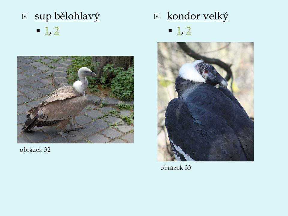 sup bělohlavý 1, 2 kondor velký 1, 2 obrázek 32 obrázek 33