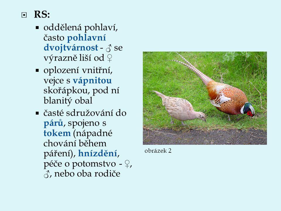 RS: oddělená pohlaví, často pohlavní dvojtvárnost - ♂ se výrazně liší od ♀ oplození vnitřní, vejce s vápnitou skořápkou, pod ní blanitý obal.