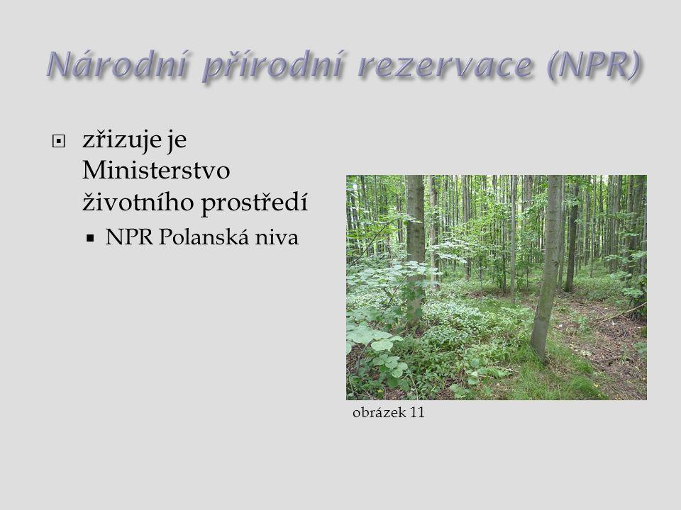 Národní přírodní rezervace (NPR)