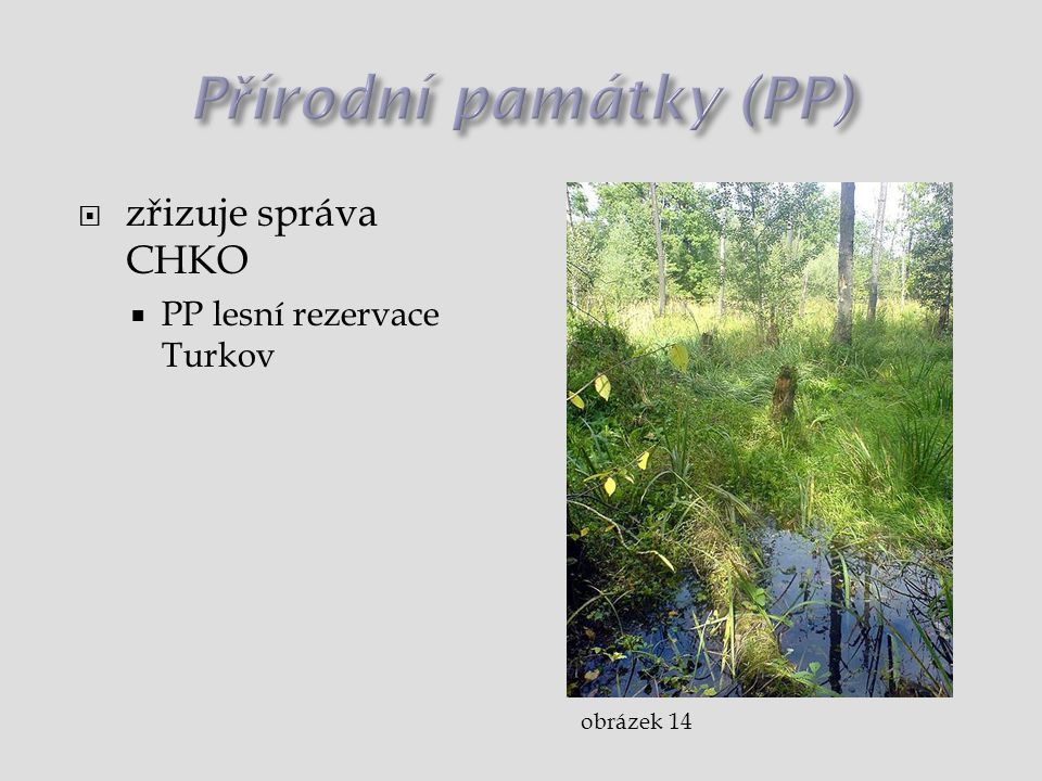 Přírodní památky (PP) zřizuje správa CHKO PP lesní rezervace Turkov