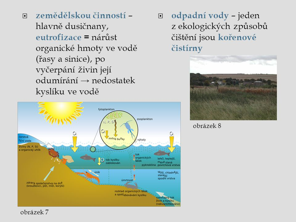 zemědělskou činností – hlavně dusičnany, eutrofizace = nárůst organické hmoty ve vodě (řasy a sinice), po vyčerpání živin její odumírání → nedostatek kyslíku ve vodě
