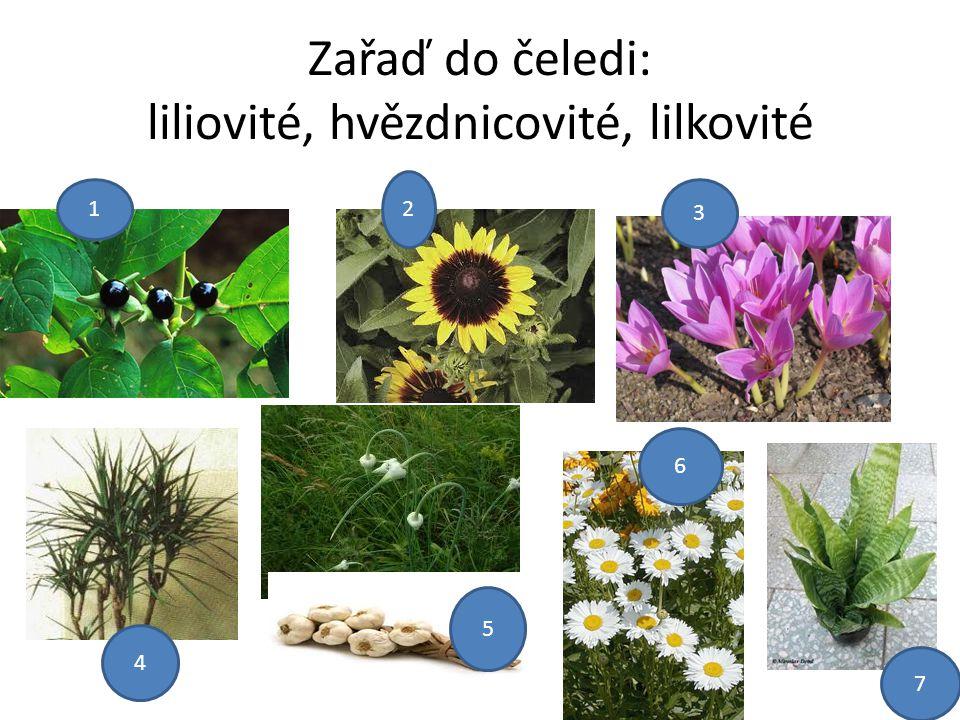 Zařaď do čeledi: liliovité, hvězdnicovité, lilkovité